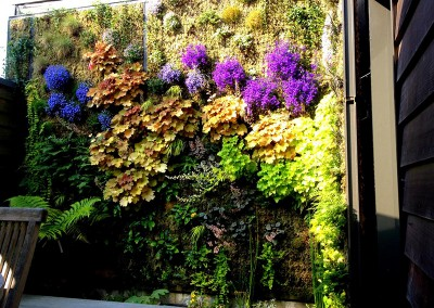 Espace végétalisé - Mur végétal