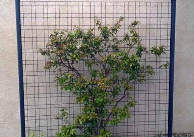 Clôture - Plante grimpante