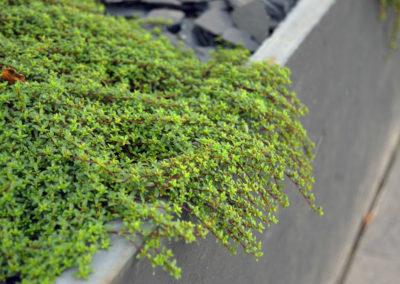 Espaces végétalisés - plantations